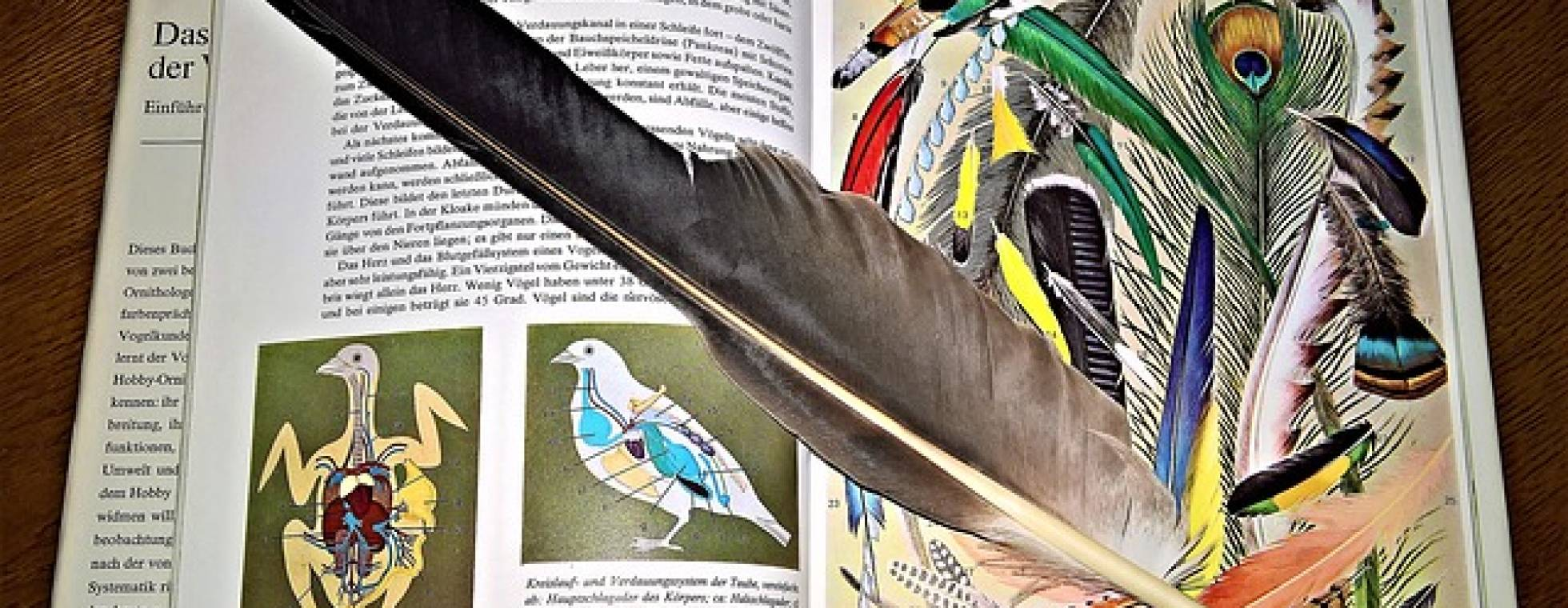 aufgeschlagenes Vogelbuch mit einer Feder darauf